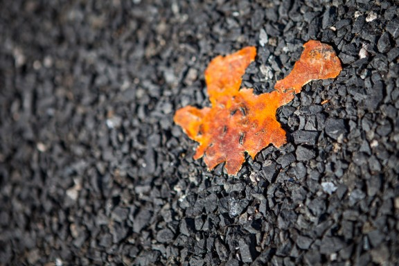 What's left of an orange peel in the middle of the road.