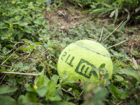 Stray tennis ball at Whitaker Tennis Center in Austin, TX