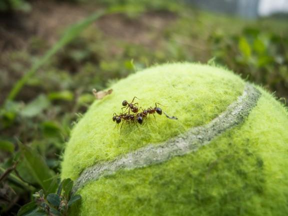 Ant playground