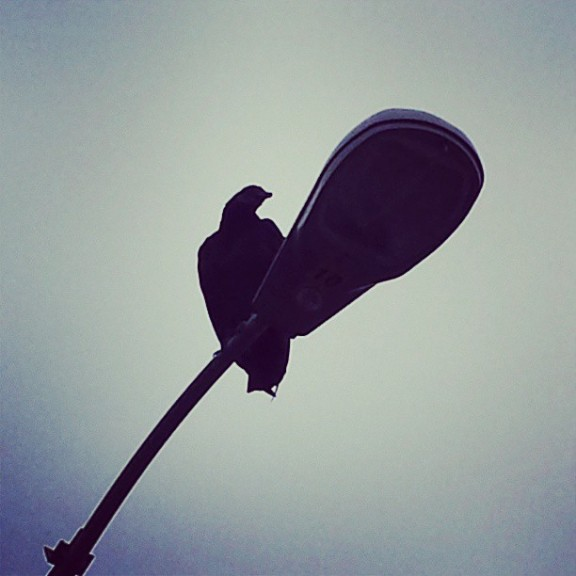 Vulture and street light