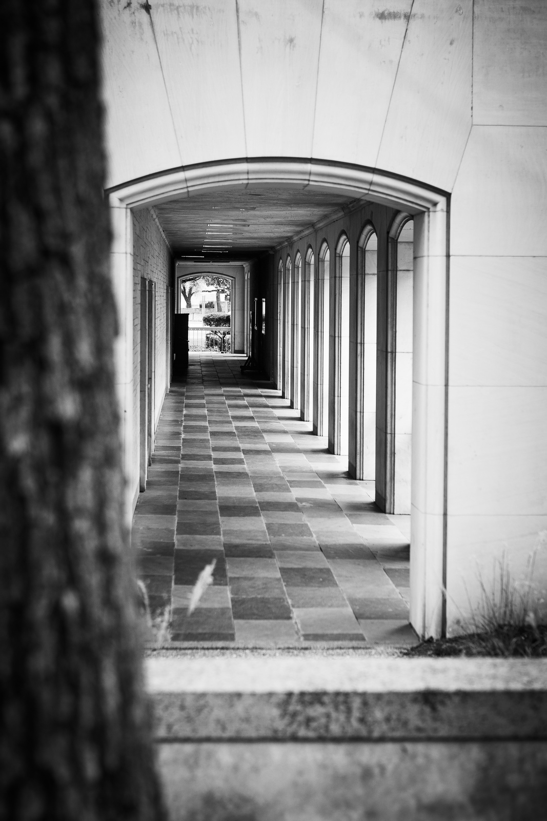 Arches with tree bark