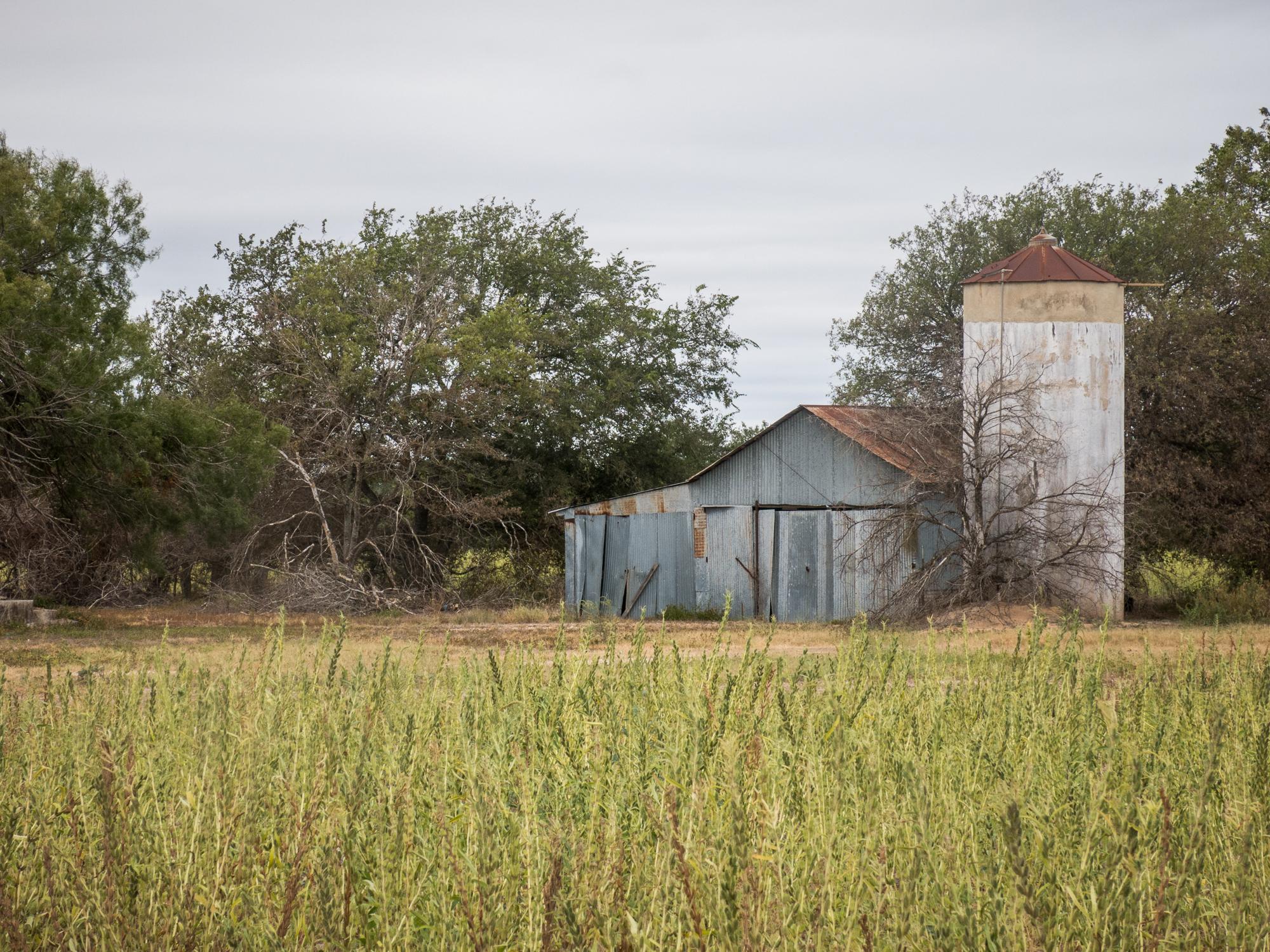 Sesame Field